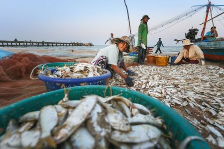 commercial fisheries: Coastal fishing are helping to take the fishs out of the nets, at Nakhon Si Thammarat province Thailand on March 20, 2558
