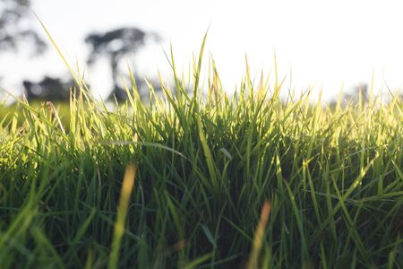 Fresh grass background in nature Stock Photo