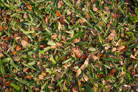 hojas antiguas: The Pile of old leaves on the grass background, texture