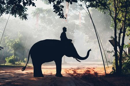 mahout: Silhouette mahout and elephant at Surin province Thailand
