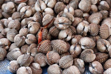 fresh cockles background, aquatic animals, seafood