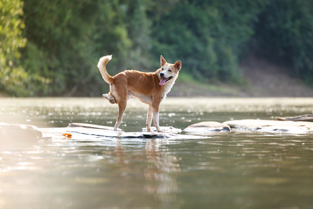 subsist: Dogs with deformed legs, smiling happily streams. Stock Photo