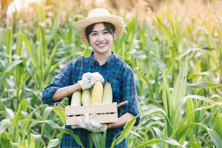 Beautiful young farmer Showing organic corn on her farm Banque d'images