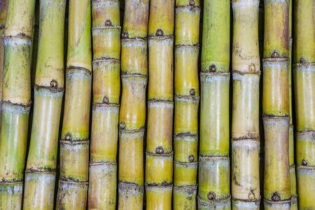 Pattern of background of sugarcane varieties