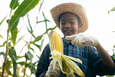 Young farmer Showing organic corn on the farm and He smiled happily