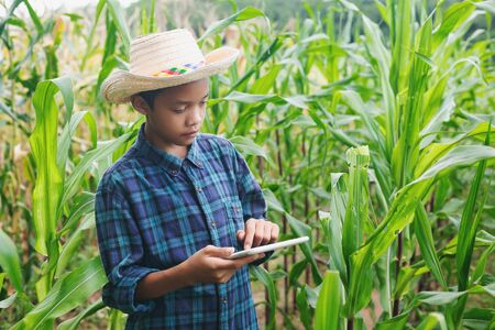 young smart farmer Inspecting Corn plant cultivation At the farm Banque d'images