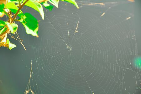 especially: Cobweb a spiders web, especially when old and covered with dust