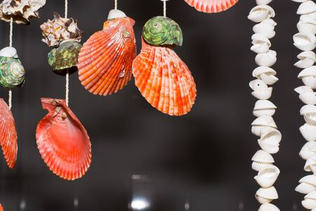 mollusc: This is hanging shell for decorate my home