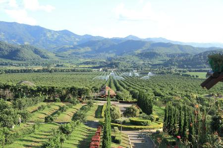 fang: Tanatorn orange plantation, Fang, Chiang mai, Thailand.