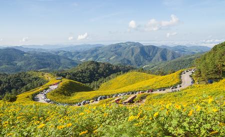 Mexican sunflower on Mae u Kho mountain, Mae Hong Son, Thailand. photo