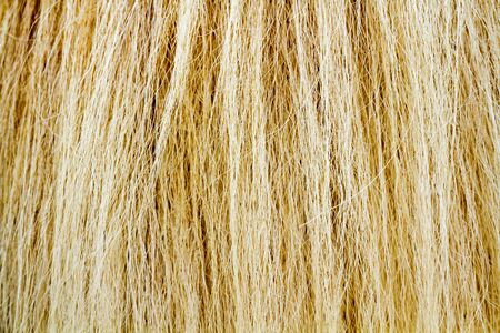 Yellow and brown fur tail horse texture as background