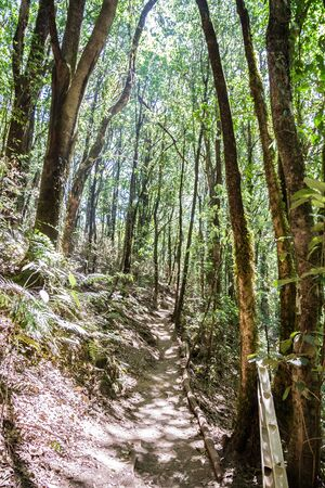 Forest footpath in Kew Mae Pan Nature Trail, Doi Inthanon National Park, Chiang mai, Thailand. photo