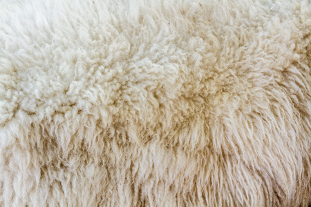 gray clothing: White and brown wool sheep fur texture as background