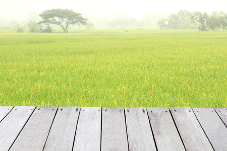 Plank wooden front Paddy rice field at north Thailand. photo