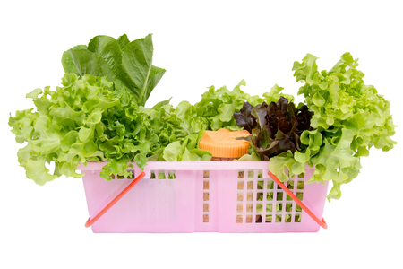 butter head: Vegetables for salad consisting of Cos lettuce, Butter head, Red oak, Green oak and Coral in pink basket isolated on white background.