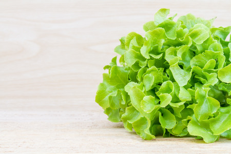lettuce: Green oak lettuce fresh on wood table. Stock Photo