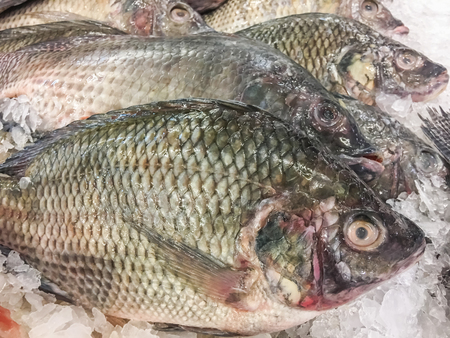 fish tail: Nile tilapia fish fresh in ice sell on market. Stock Photo