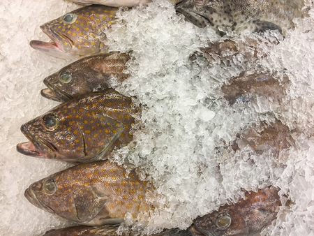 Greasy grouper fish fresh in ice sell on market. Stock fotó