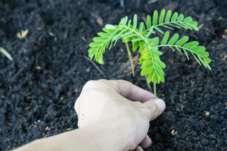 cultivated: Hand plant a shoots sprout a tree in the soil with copy space. Stock Photo