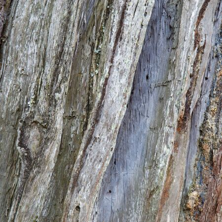 Wood skin pattern from pine trees is a texture taken from a real tree.