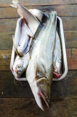bullhead: Closeup Sheatfish on aluminium tray