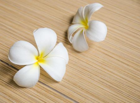 replenish: Two white plumeria on tiles floor Stock Photo