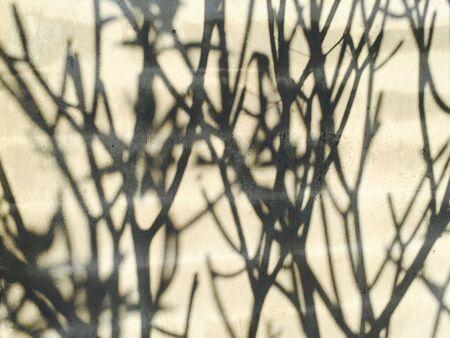 tree shadow: Tree shadow on the wall