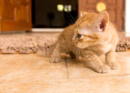 Cute little kitten on tile floor. Stock Photo