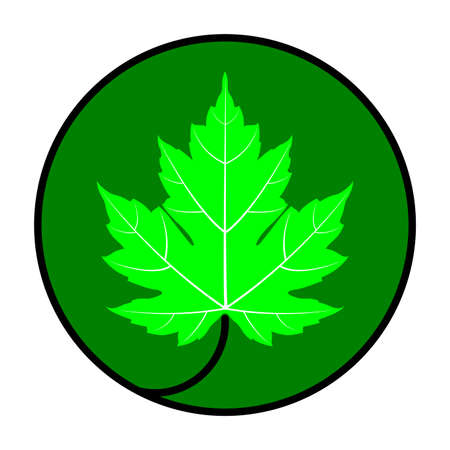 Green maple leaf vector icon in black circle and dark green background. Maple leaf clip art.