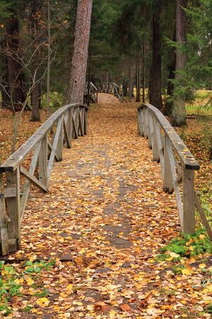 pacification: Carpet from yellow autumn leaves on the ground, a wood and wooden bridges. Park in Shchelykovo, Russia