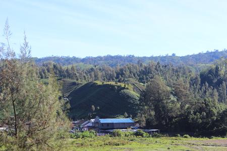 Beautiful Farm , In tengger Semeru Bromo