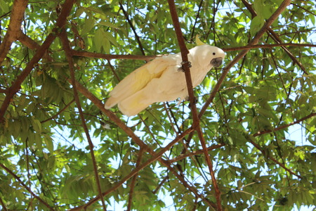 cockatoo bird Stock Photo
