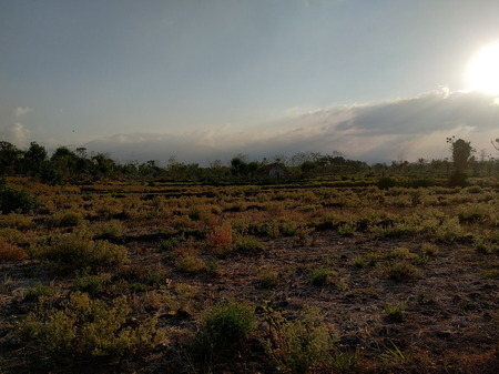 the atmosphere of rural fields in Indonesia 版權商用圖片