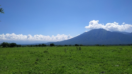 Baluran Savana Forest in Situbondo, East Java, Indonesia
