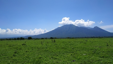 Baluran Savana Forest in Situbondo, East Java, Indonesia