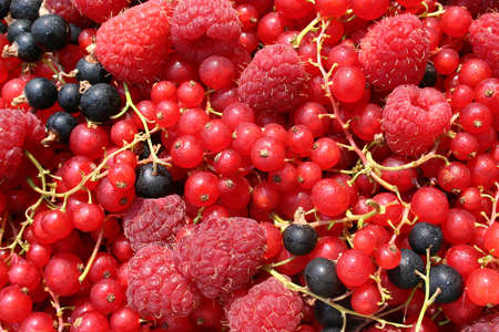 colorfu: Close up texture of natural various berryes Stock Photo