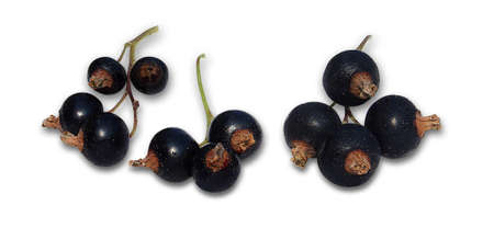 currants: Black currants