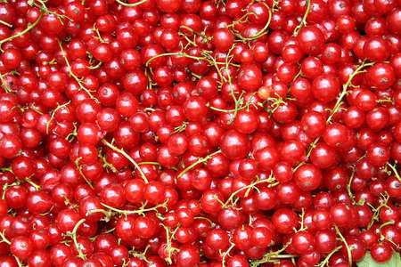 Red Cranberry Textur