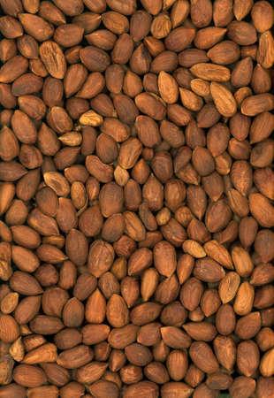 filbert: Full frame of filbert nuts Stock Photo