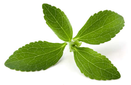 흰색 배경에 고립 된 스테비아 rebaudiana, sweetleaf 설탕 대용품 스톡 콘텐츠 - 9586622