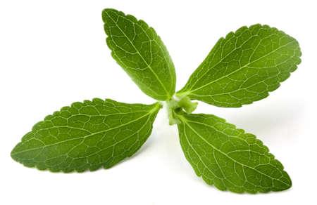 Stevia Rebaudiana, Süßkraut Zucker ersetzen isolierten auf weißen Hintergrund