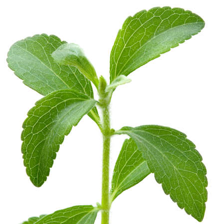 Stevia rebaudiana, sweetleaf sugar substitute isolated on white background