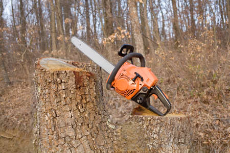 forestry industry: Chainsaw on cutted log Stock Photo