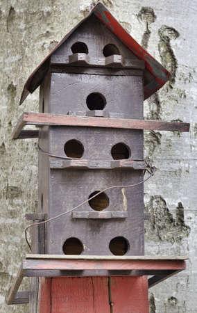 Bird house on the beech tree photo