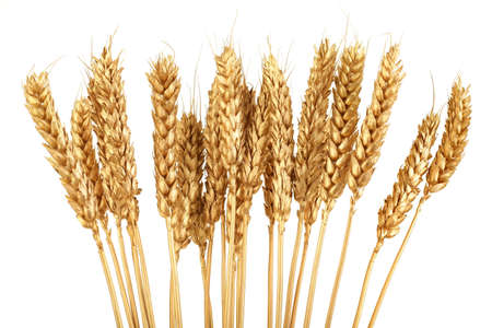 wheat isolated: Bunch of Golden Wheat Isolated on White Background Stock Photo