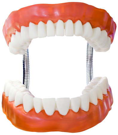 false teeth: Plastic Denture Model Stock Photo