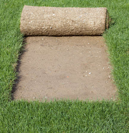 soyulmuş: Grass Carpet Rolls Peeled from Sod