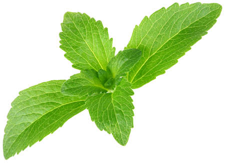 스테비아 rebaudiana, 흰색 배경에 고립 달콤한 잎 설탕 대용품