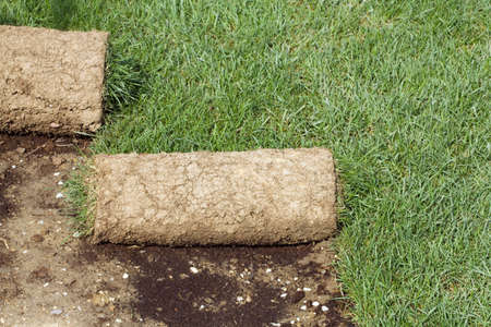 Grass Carpet Rolls Peeled from Soil photo