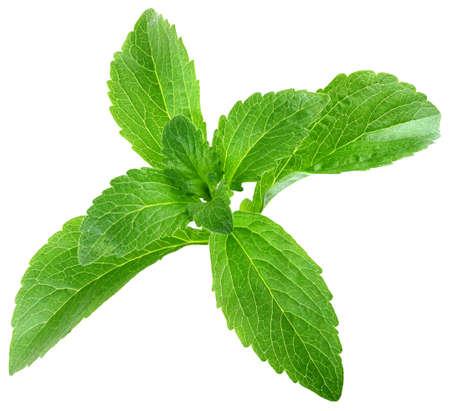 Stevia rebaudiana Blätter auf weißem Hintergrund